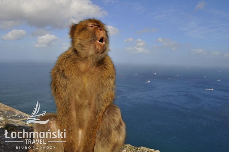 DSC 0997 wm - Andaluzja i Gibraltar - fotorelacja Dominiki Stańka