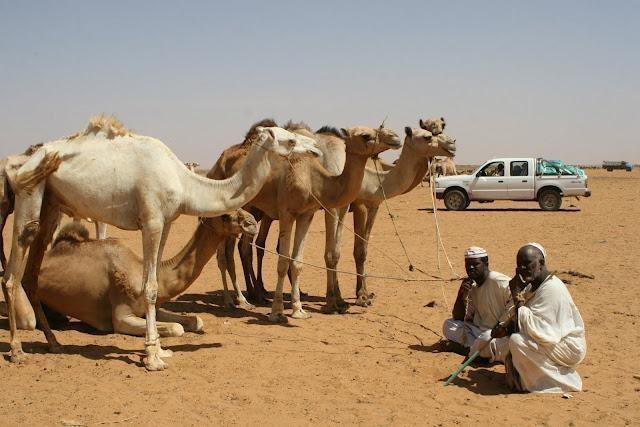 IMG 1407 - SUDAN PÓŁNOCNY: Zrozumieć Potęgę Nilu