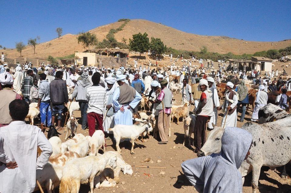 animal market 688972 960 720 - SUDAN PÓŁNOCNY: Zrozumieć Potęgę Nilu