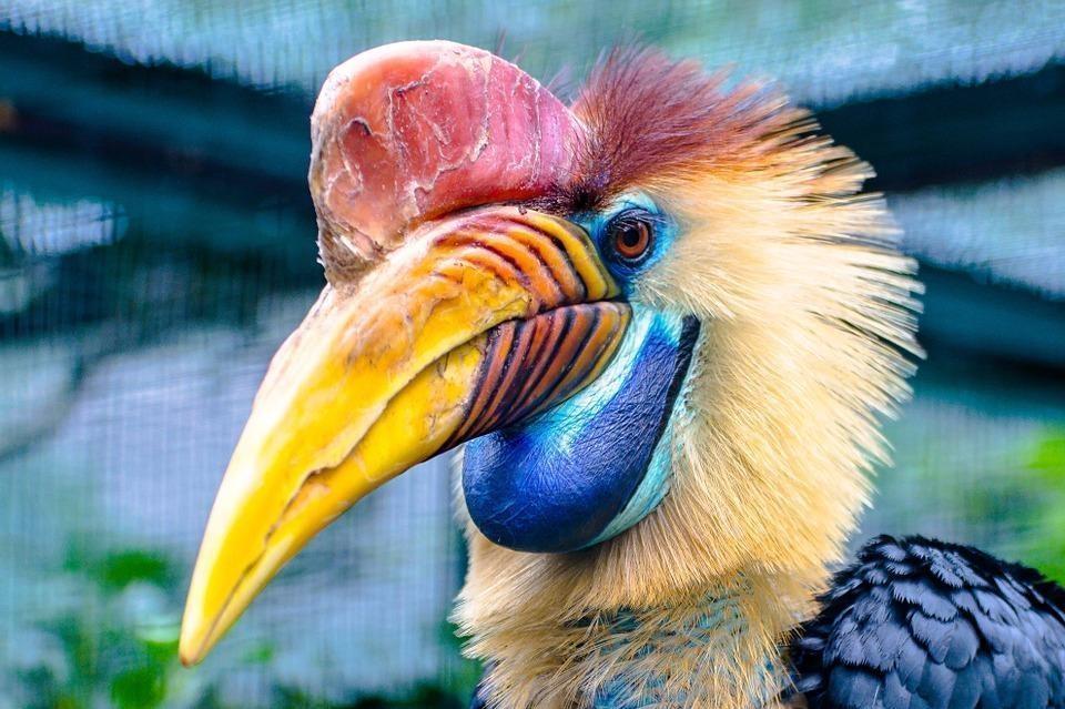 animal 175033 960 720 - INDIE: Assam i Nagaland - Plemiona Naga i Festiwal Hornbill
