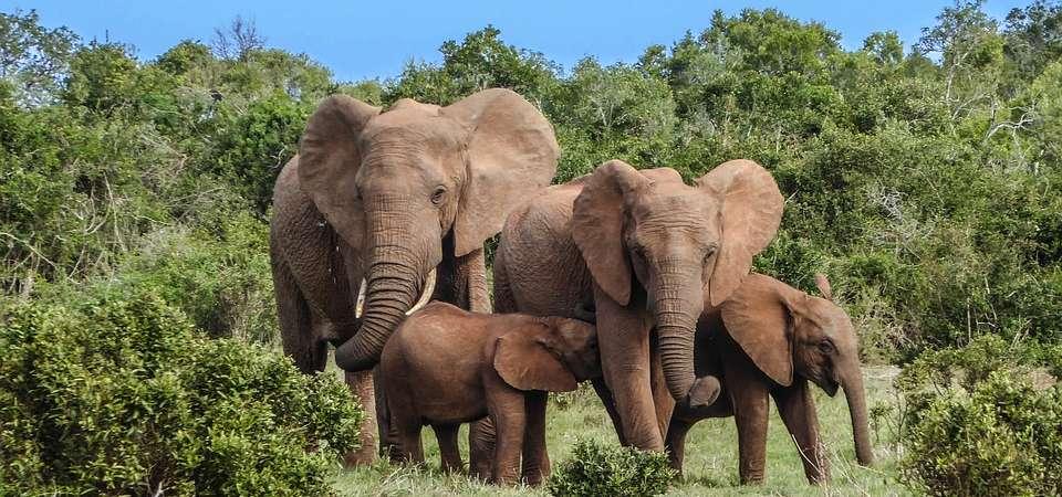 RPA: Kapsztad i Parki Narodowe
