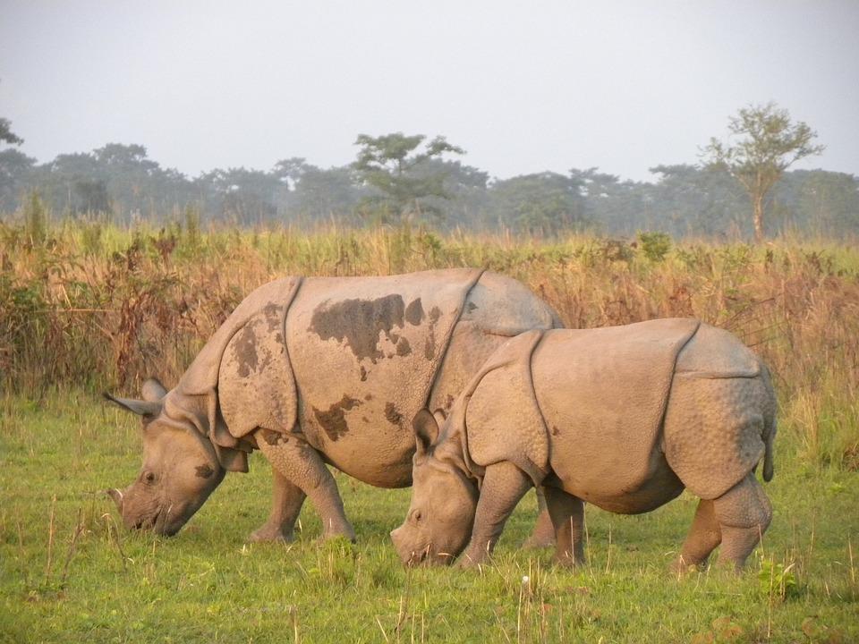 manas rhino 2120928 960 720 - INDIE: Assam i Nagaland - Plemiona Naga i Festiwal Hornbill