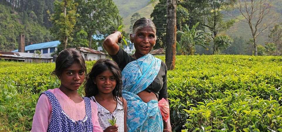 SRI LANKA: wycieczka szlakiem cejlońskiej herbaty