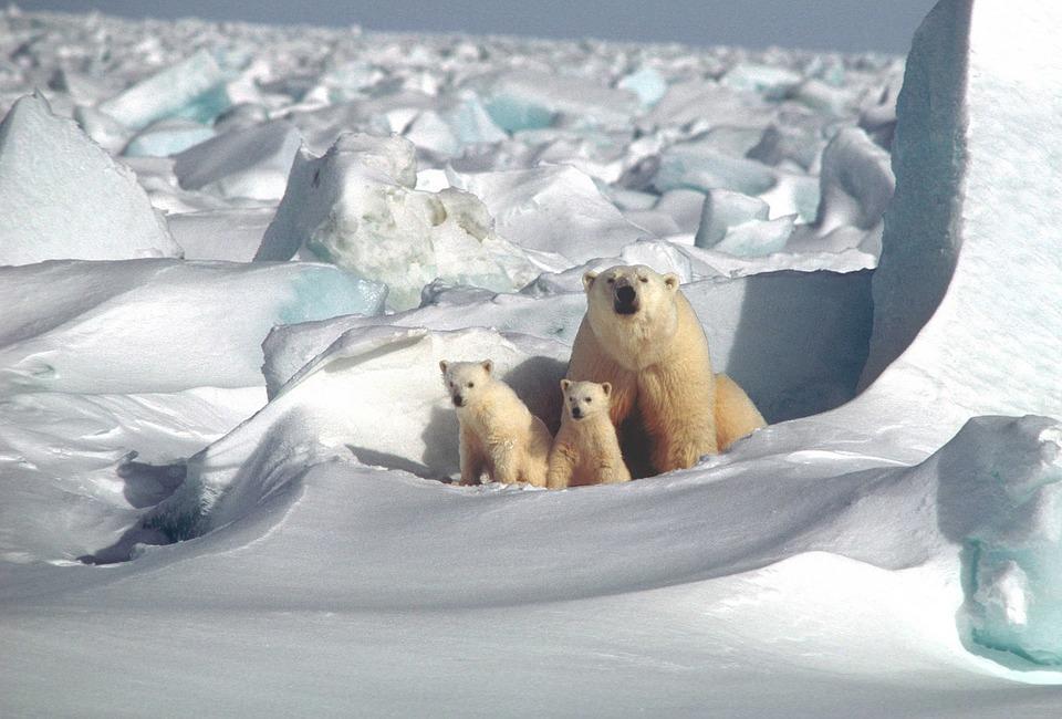polar bear 1509103 960 720 - BIEGUN PÓŁNOCNY – wycieczka na szczyt Ziemi