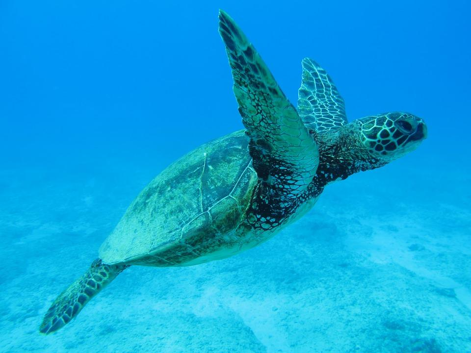 Hawaje USA - wakacje