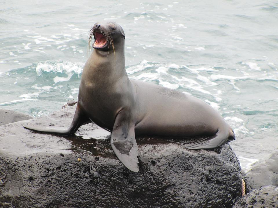 sea lion 1646863 960 720 - GALAPAGOS - KOLUMBIA