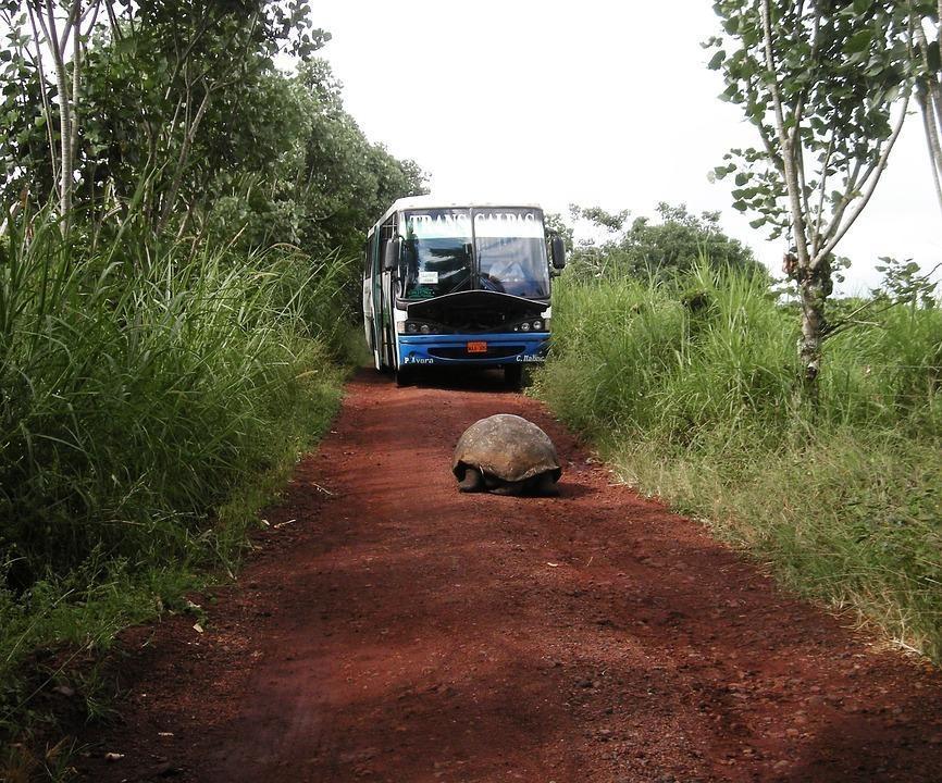 tortoise 18209 960 720 1 - GALAPAGOS