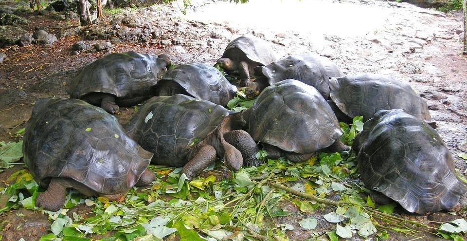 tortoise 18210 960 720 - GALAPAGOS