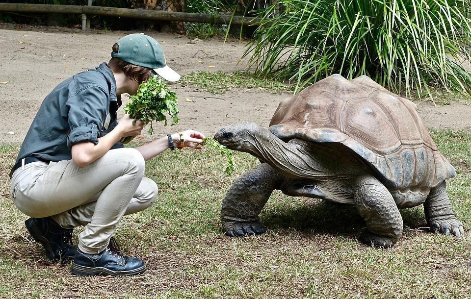 tortoise 2311869 960 720 1 - GALAPAGOS