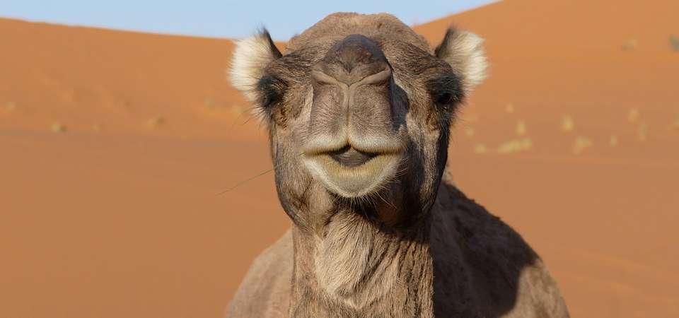 MAROKO: wyprawa pełna orientu oraz marokańskie rozkosze podniebienia