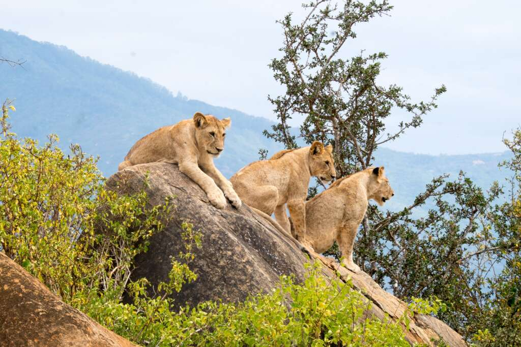 a p 1pdp PGplss unsplash 1024x683 - KENIA: Masai Mara, Jezioro Naivasha i Rezerwat szympansów w Ol Pejeta