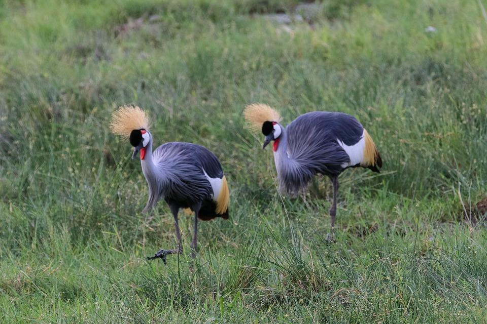 africa 4043959 960 720 - KENIA: Masai Mara, Nakuru, Amboseli i wypoczynek w Mombasa