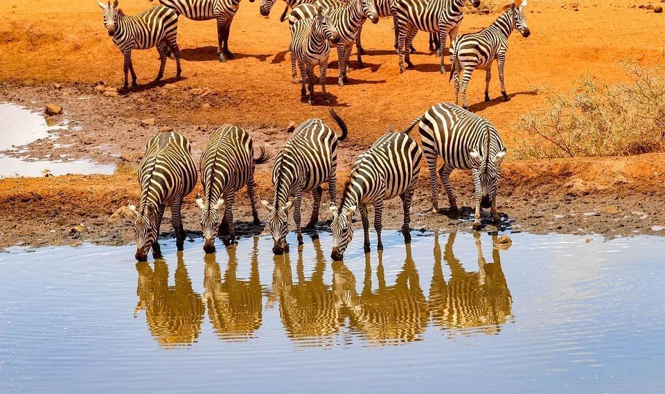africa 4045663 960 720 - KENIA: Masai Mara, Nakuru, Amboseli i wypoczynek w Mombasa