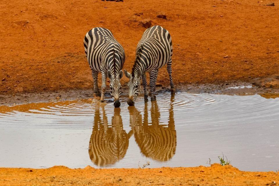 africa 4045665 960 720 - KENIA: Masai Mara, Nakuru, Amboseli i wypoczynek w Mombasa