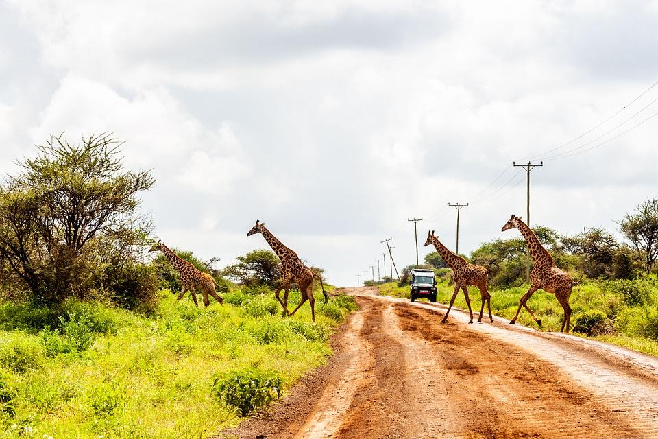 Safari w Kenii wycieczka