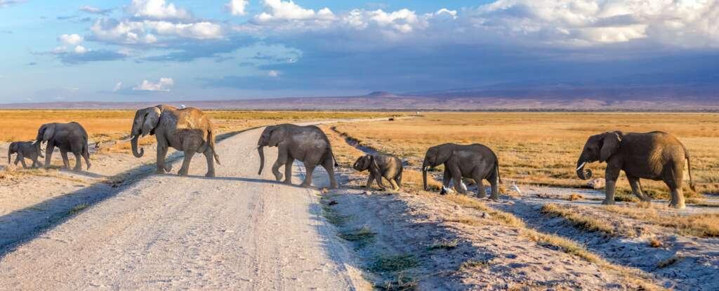 neil and zulma scott hjv3VO jpnc unsplash 1024x415 - KENIA: Masai Mara, Jezioro Naivasha i Rezerwat szympansów w Ol Pejeta
