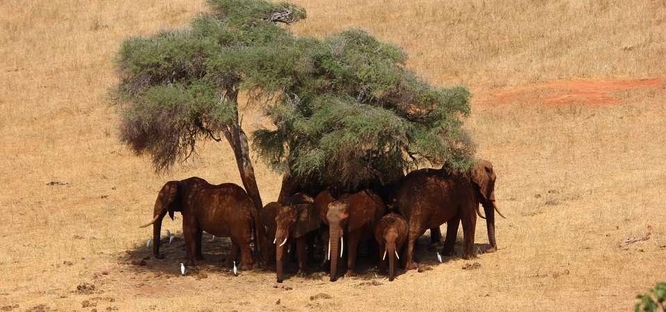 KENIA: Safari i wypoczynek w Mombasa