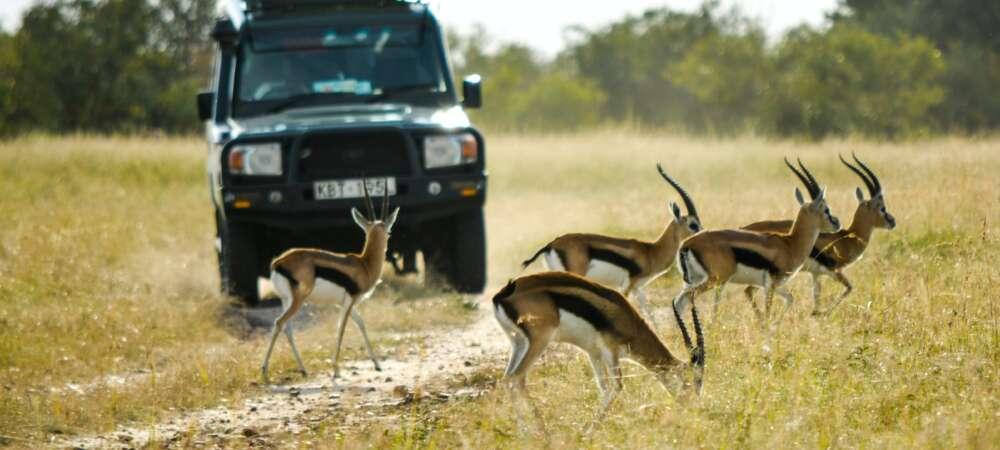 KENIA: Masai Mara, Jezioro Naivasha i Rezerwat szympansów w Ol Pejeta