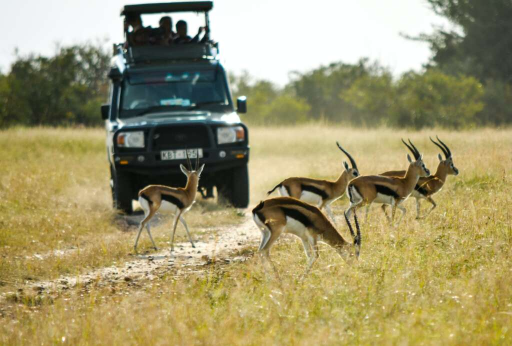 sneha DEBrMzu D8I unsplash 1024x692 - KENIA: Masai Mara, Jezioro Naivasha i Rezerwat szympansów w Ol Pejeta