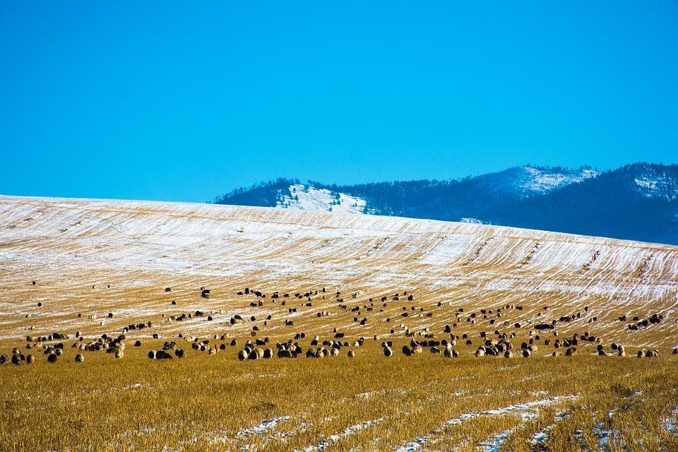 Mongolia zima wycieczki