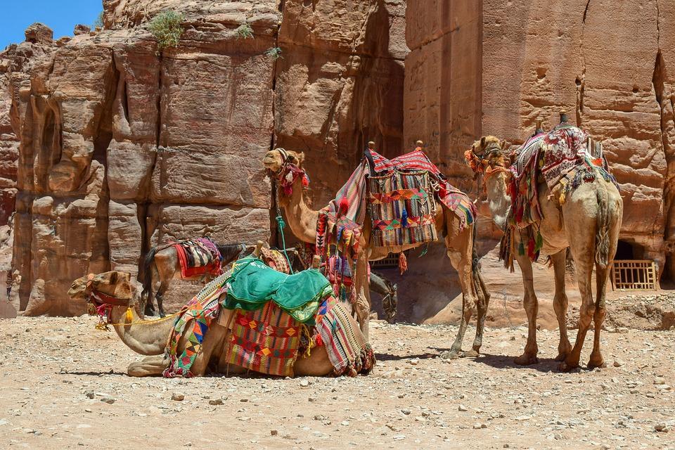 camels 4365260 960 720 - JORDANIA: zwiedzanie + wypoczynek nad Morzem Martwym i Morzem Czerwonym