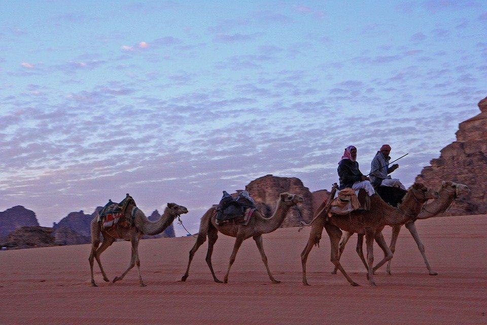 camels 5308828 960 720 - JORDANIA: zwiedzanie + wypoczynek nad Morzem Martwym i Morzem Czerwonym