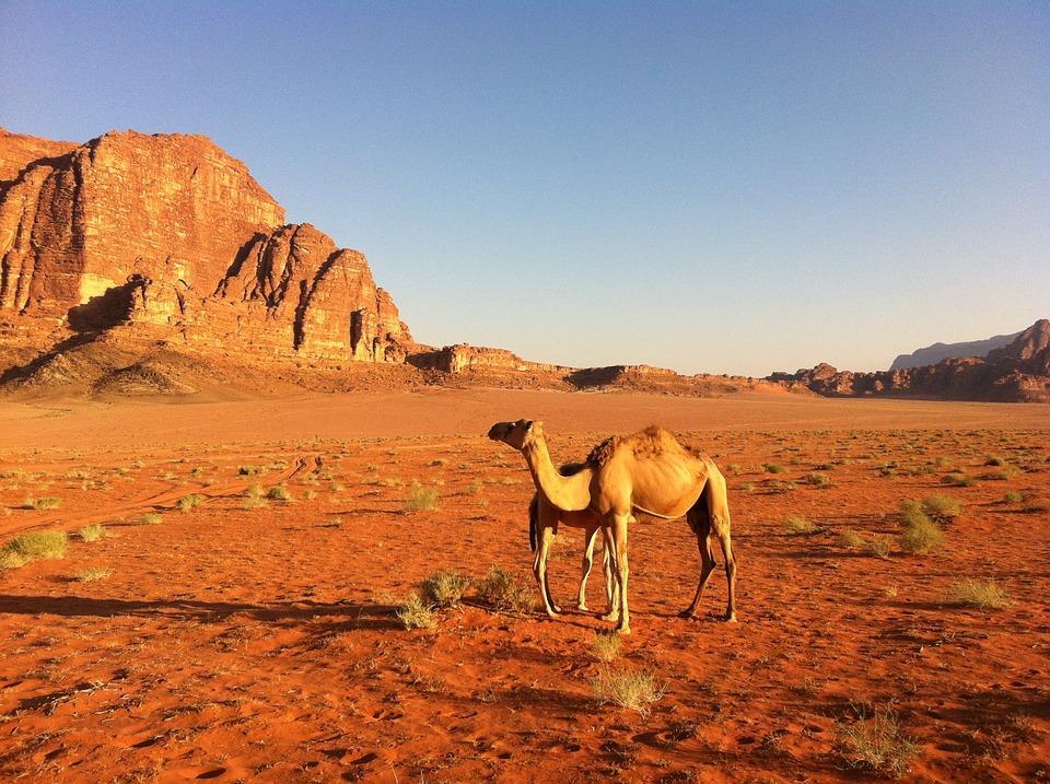 desert 1633049 960 720 - JORDANIA: zwiedzanie + wypoczynek nad Morzem Martwym i Morzem Czerwonym