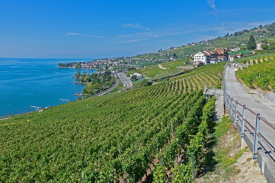 vines 3665216 960 720 - SZWAJCARIA