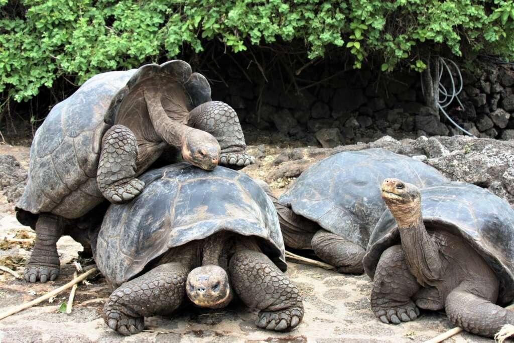 Rejs po Galapagos