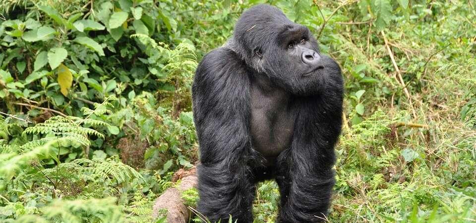 RWANDA – UGANDA