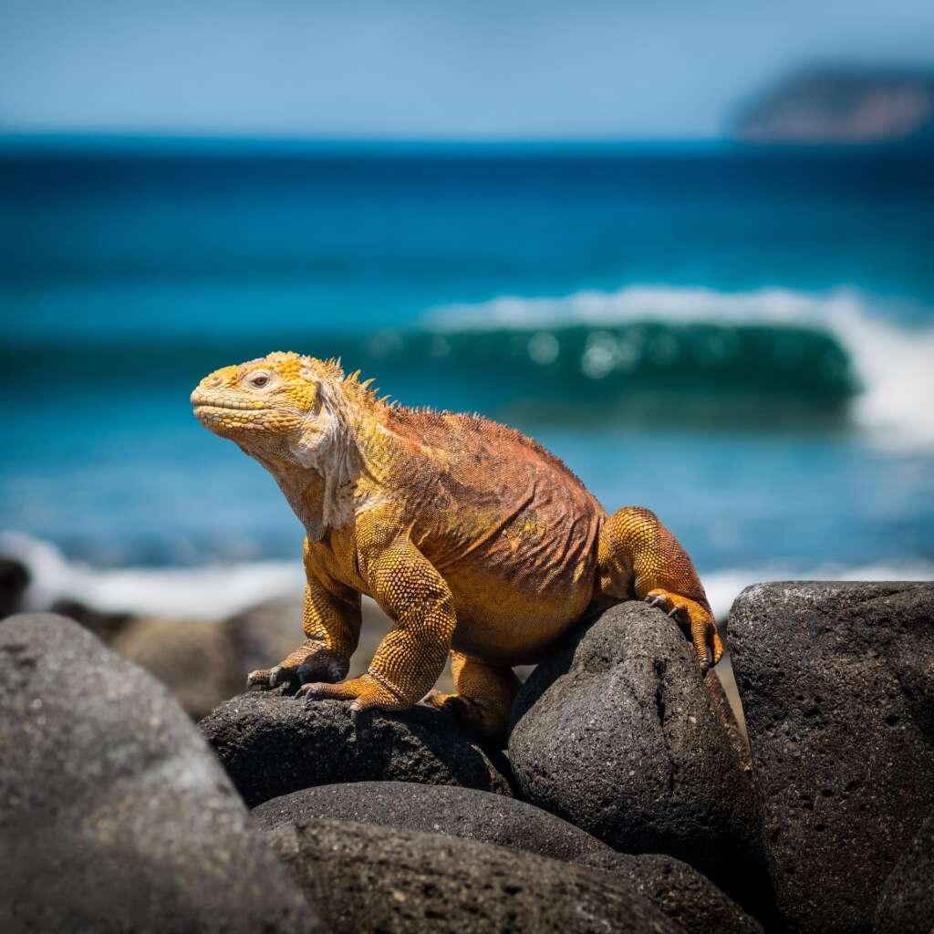 Galapagos wycieczka